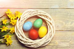 Colorful easter eggs in wreath with yellow narcissus on wood. Happy easter egg. holiday bunny and eggs, spring flower backround colorful painted easter eggs in stock images