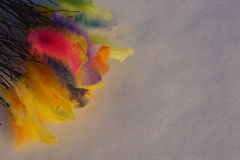 Colorful Easter feathers on white snow Royalty Free Stock Photography