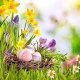 Colorful Easter greeting card with spring flowers Royalty Free Stock Image