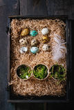 Colorful Easter quail eggs Royalty Free Stock Images