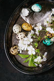 Colorful Easter quail eggs Royalty Free Stock Photography
