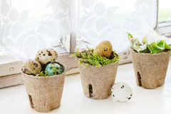 Colorful Easter quail eggs Stock Images