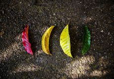 Colorful, Eco, Friendly royalty free stock photography