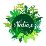 Colorful  ector Nature illustration Stock Images