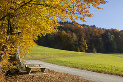 Colorful edge of the wood with resting bench Stock Photos