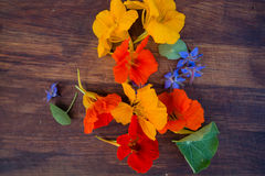 Colorful edible flowers on wooden background Stock Image