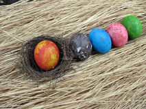 Colorful of eggs on dried grass background,easter Stock Photo