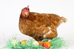 Colorful Eggs in grass with a brown hen Stock Photo