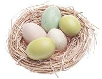 Colorful Eggs in Nest Royalty Free Stock Photo