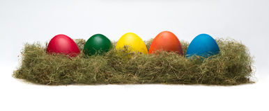 Colorful eggs in the nest Stock Images