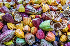 Colorful, empty cacao pods, Guatemala. Pile of discarded empty cacao pods after cacao beans have been harvested, Guatemala stock photography