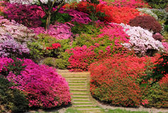 A colorful English Park in Spring Royalty Free Stock Photo