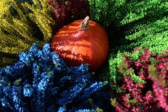 Colorful erica and a pumpkin. The picture shows colorful erica and a pumpkin stock images