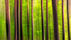 Colorful European Forest Stock Images