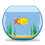 Colorful exotic fish in a fishbowl with seaweed and sand on the bottom. Vector illustration, flat. Colorful exotic fish in a fishbowl with seaweed and sand on Stock Photos