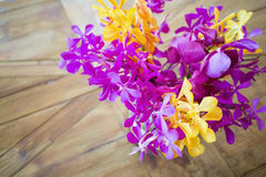 Colorful exotic orchid Royalty Free Stock Images
