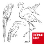 Colorful exotic tropical birds - flamingo, macaw, hummingbird and toucan Stock Photography