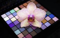 Colorful eye shadows palette Stock Photos