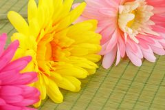 Daisies. Colorful fabric daisies on bamboo background, closeup picture Stock Images