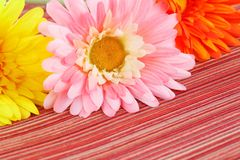 Colorful fabric daisies stock photos