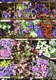 Colorful fabric flower Stock Images