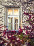 A colorful facade and windows on an old building covered with vines. Czech Republic stock images