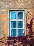 A colorful facade and windows on an old building covered with vines. Czech Republic royalty free stock photos