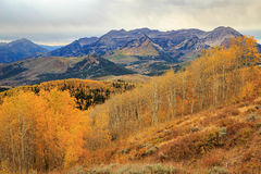 Colorful fall aspens, Utah Stock Images