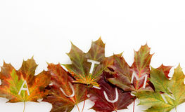 Colorful fall or autumn leaf border Royalty Free Stock Images