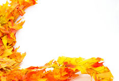 Colorful fall or autumn leaves Stock Photo