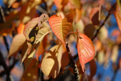 Colorful fall autumn leaves Royalty Free Stock Photography