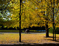 Colorful fall autumn park. With falling leaves from trees Royalty Free Stock Photography