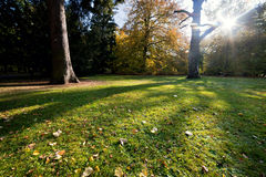 Colorful fall autumn park Royalty Free Stock Photos