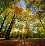Colorful fall autumn park Royalty Free Stock Images