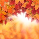 Colorful fall background. Autumn maple leaves and abstract sun light stock image