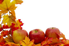 Colorful Fall Border Stock Images