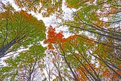 Colorful Fall Canopy on a Cloudy Day Stock Photos