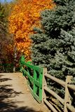 Fall colors bring Halloween to us in the fall. Colorful Fall Colors appearing on the Maple Trees royalty free stock image