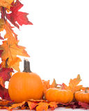 Colorful Fall Decoration Stock Photos