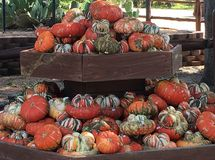 Fall pumpkins and gourds Royalty Free Stock Images