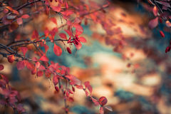 Colorful Fall Flora Royalty Free Stock Photography