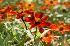 Colorful Fall Flowers Stock Photography