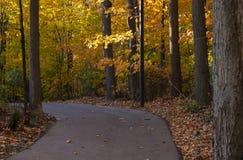 Free Colorful Fall Foliage Along A Beautiful Path 2 Royalty Free Stock Photos - 162014328