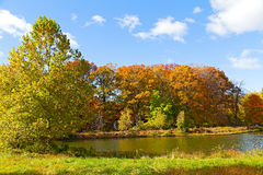Colorful fall foliage of deciduous trees near the water. Royalty Free Stock Image