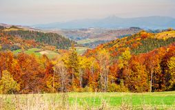 Colorful fall foliage mixed forest. Lovely countryside landscape in mountains royalty free stock photography