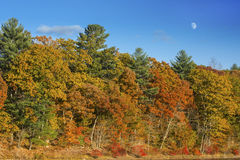 Colorful fall foliage with moonrise in a blue sky, Connecticut. Stock Photos
