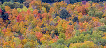 Colorful fall foliage Royalty Free Stock Photos