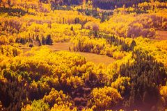 Colorful Fall Forest Scenery Royalty Free Stock Photography