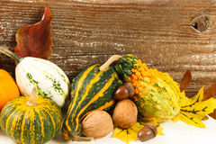 Colorful Fall Harvest Gourds And Nuts Royalty Free Stock Image