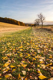Colorful fall in landscape Stock Images